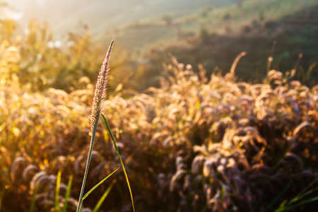 Wheat on a great summer sunset background Stock Photo - 12741713