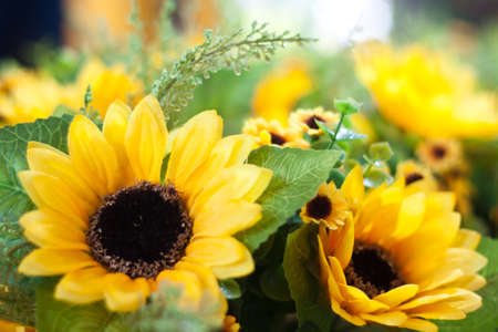 Close-up of sunflower.Shallow depth of field. Stock Photo - 14772820