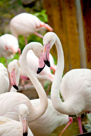 Flamingo photo