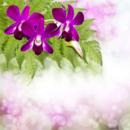 orchid and bokeh - floral background photo