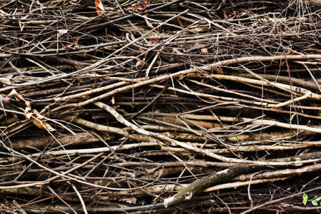 Twigs texture for background Stock Photo - 15505029