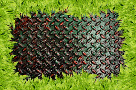 Grunge diamond  metal plate and green grass frame used background