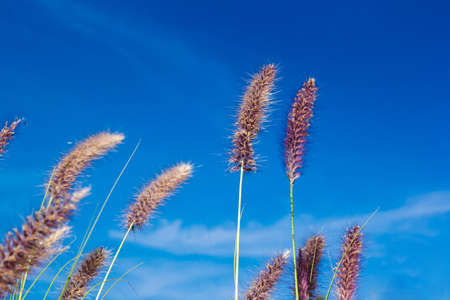 Heads of wheat against the sky Stock Photo - 16296637