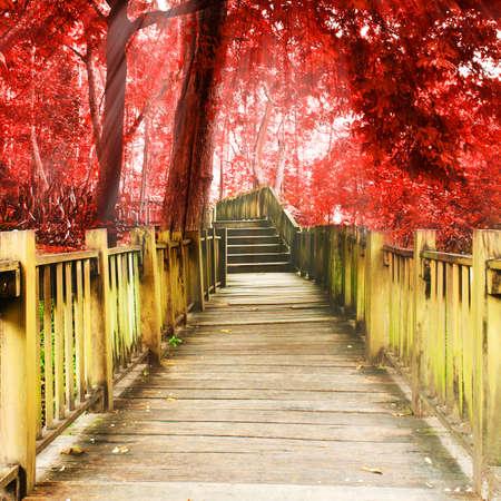 ジャングル, 国立公園, チェンマイ, タイへの階段