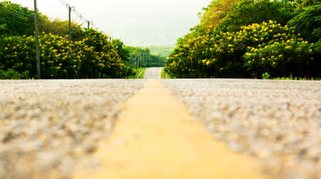 road in forest Stock Photo - 16404300
