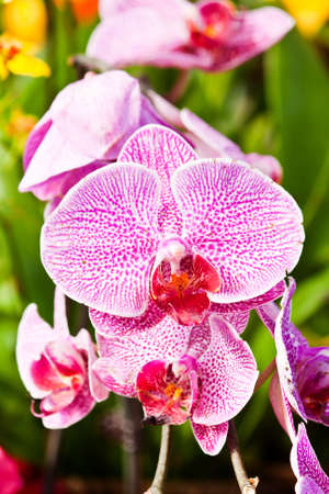 orchid bloom photo