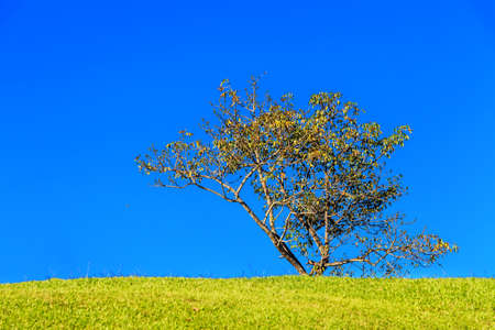Field and tree against blue sky photo