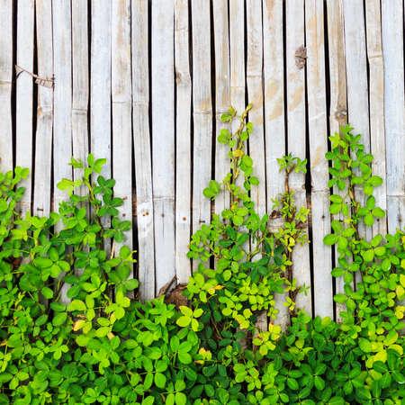 leaf border on bamboo panel background photo
