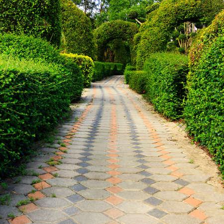 Pathway in garden photo