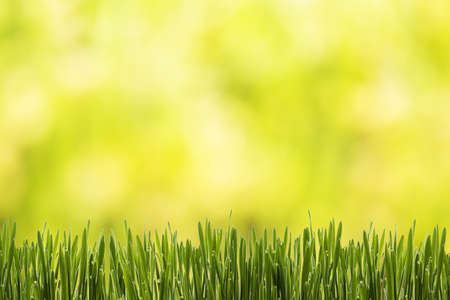 nature green: Naturaleza Fondo de la hierba verde.