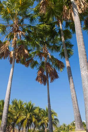 Tropical garden design. photo