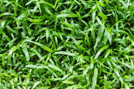 frescura: campo frescura hierba cerca.