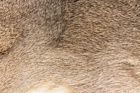 animal fur: High quality of natural brown fur texture background Stock Photo