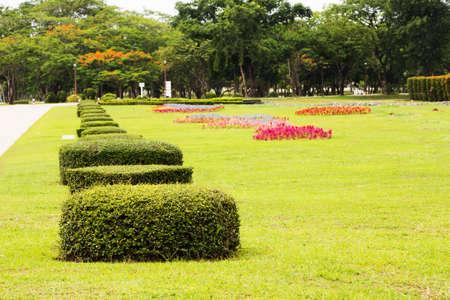 lush: Beautiful lush bushes in garden