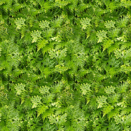 assort: Seamless nature background. Green leaves texture after rainy day. Stock Photo