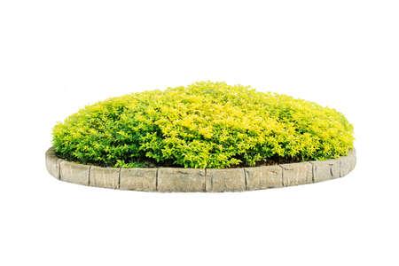 Green bush isolated on white background Standard-Bild