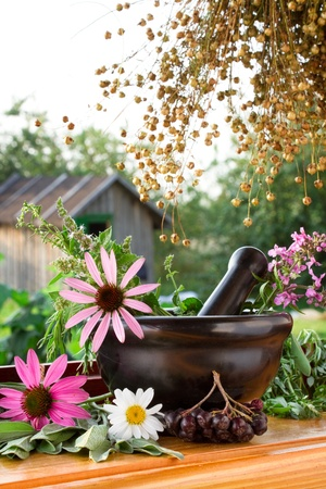 mortar and pestle with healing herbs Stock Photo - 11155763