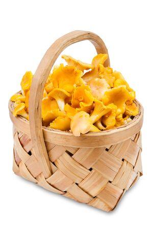 chanterelle: chanterelle mushrooms in basket, isolated on white Stock Photo