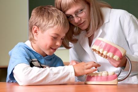 Dentist and boy with  teeth anatomy model Stock Photo