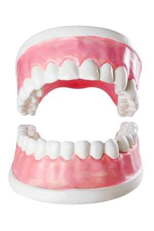 mouth cavity: jaw of dentist Stock Photo
