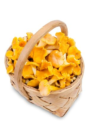 chanterelle: chanterelle mushrooms in basket, isolated Stock Photo