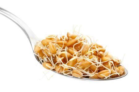 germinación: Germinadas las semillas de trigo en la cuchara Foto de archivo