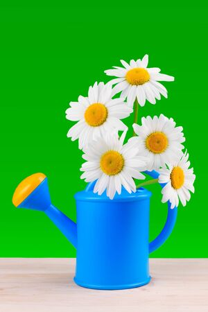 watering can with daisies on green background Stock Photo - 14118599