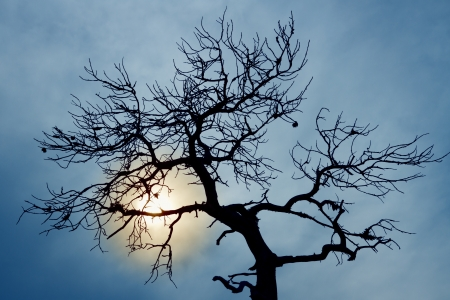duskiness: silhouette of bare tree on cloudy sky Stock Photo