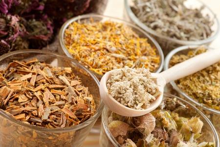 healing herbs in glass cups, herbal medicine Stock Photo - 17998738