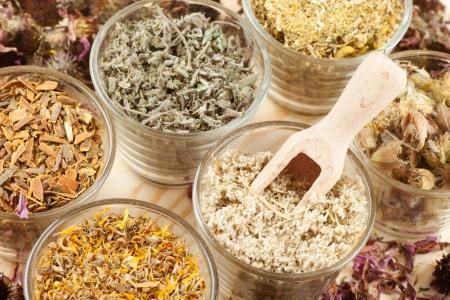 erbe aromatiche: erbe curative in bicchieri di vetro, la fitoterapia Archivio Fotografico