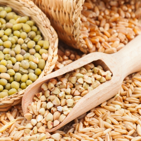 Green buckwheat, wheat, oat and mung - Cereal Grains and beans photo