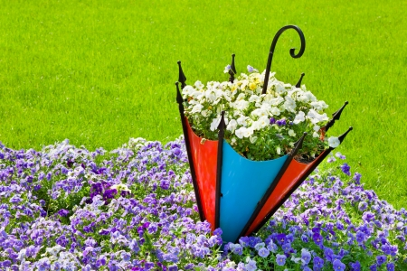 flower bed: pansy flowerbed with decorative umbrella