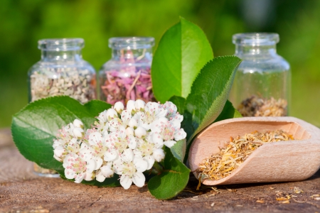 glass bottles with healing herbs on wooden board in sunset sunlight, herbal medicine Stock Photo - 19849063