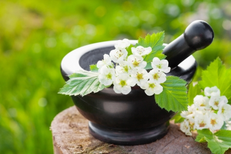 mortar with blossom hawthorn, herbal medicine  Stock Photo