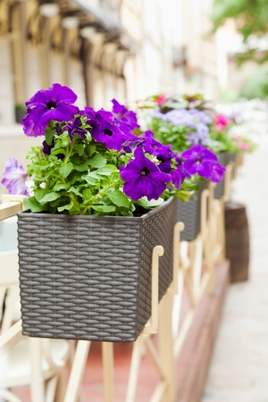restaurant exterior: Flowerpot with flowers in outdoor cafe