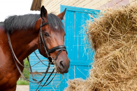 horse stable: horse eating a hay near the stable Stock Photo
