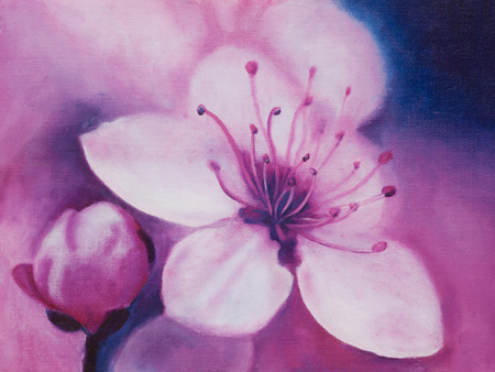 Spring Cherry blossoms, oil painting Stock Photo - 22277147