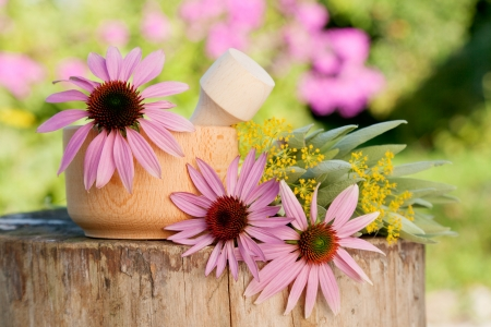 mortar with  coneflower and healing herbs, herbal medicine Stock Photo - 24720016