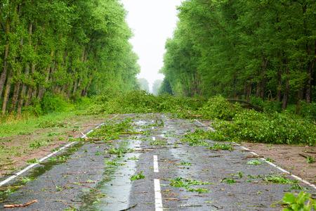 後ハリケーン。道路に倒れた木柳
