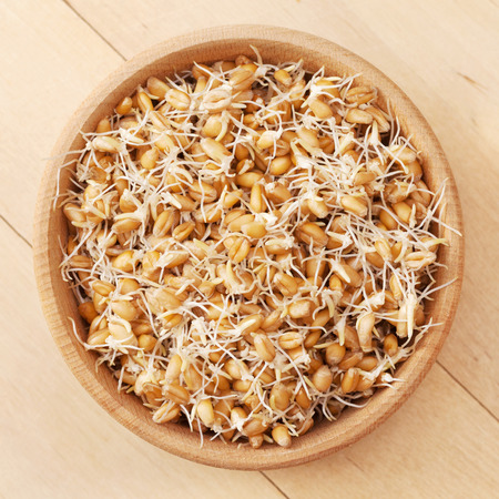 wheat sprouts in wooden bowl, top view photo