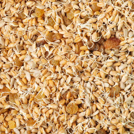 macrobiotic: mixed wheat sprouts, raisins and sunflower seeds, macrobiotic healthy food Stock Photo