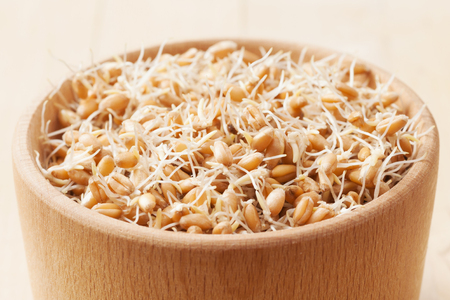wheat sprouts in wooden bowl photo