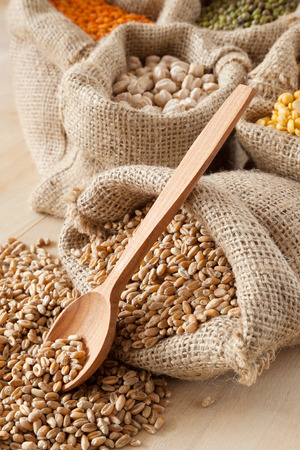 hessian bag with wheat and wooden spoon closeup; peas, chick peas, red lentils and green mung on background photo