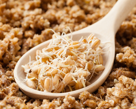 mingle: wooden spoon with wheat sprouts and ground sprouted grains background, nutrition healthy food