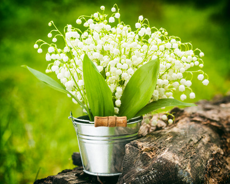 Wild spring lily of the valley flowers in bucket in forest