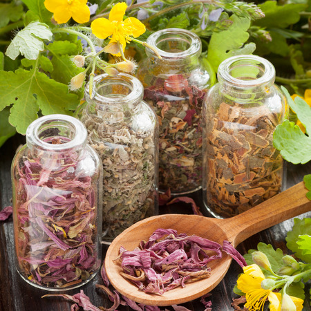 medicinal: healing herbs in glass bottles, dried healthy plants in wooden spoon, herbal medicine