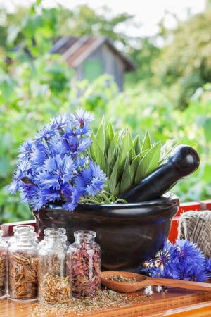 window treatments: mortar with blue cornflowers and sage on windowsill, herbal medicine Stock Photo