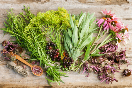 sorb: bunches of healing herbs and coneflowers on wooden plank, top view, herbal medicine Stock Photo