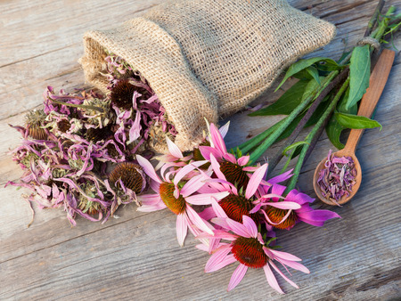 bunch of healing coneflowers and sack with dried echinacea flowers on wooden plank, herbal medicine