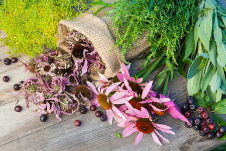 bunches of healing herbs and coneflowers on wooden plank, herbal medicine Фото со стока